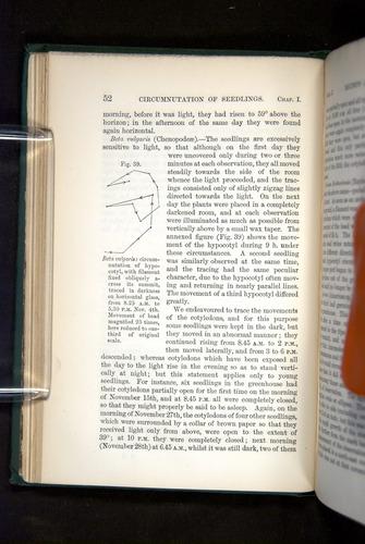 Image of Darwin-F1325-1880-052