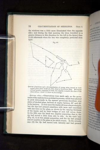 Image of Darwin-F1325-1880-054