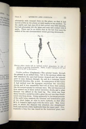 Image of Darwin-F1325-1880-055
