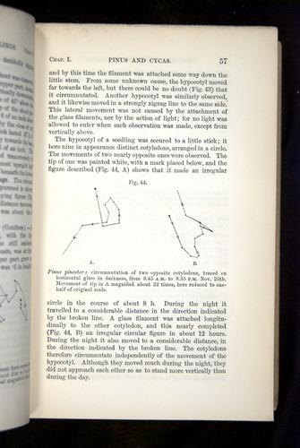 Image of Darwin-F1325-1880-057