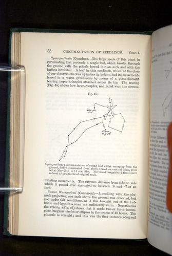 Image of Darwin-F1325-1880-058