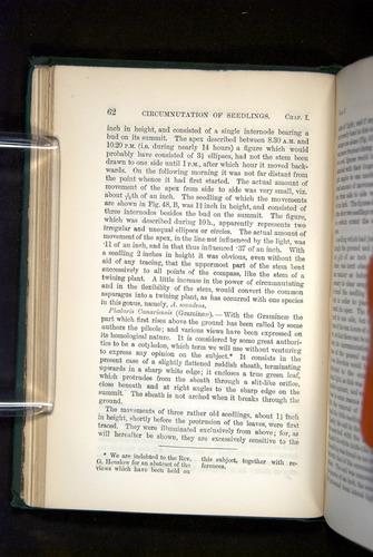 Image of Darwin-F1325-1880-062