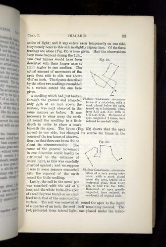 Image of Darwin-F1325-1880-063