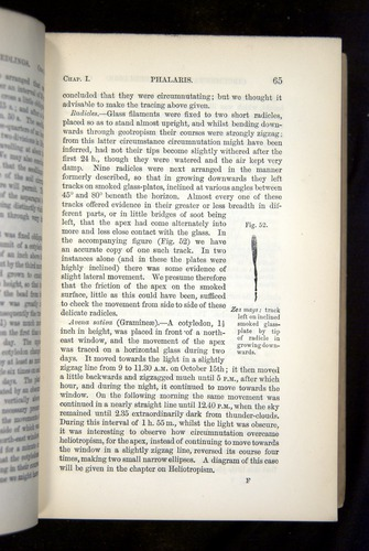 Image of Darwin-F1325-1880-065