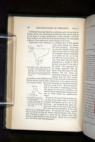 Image of Darwin-F1325-1880-066