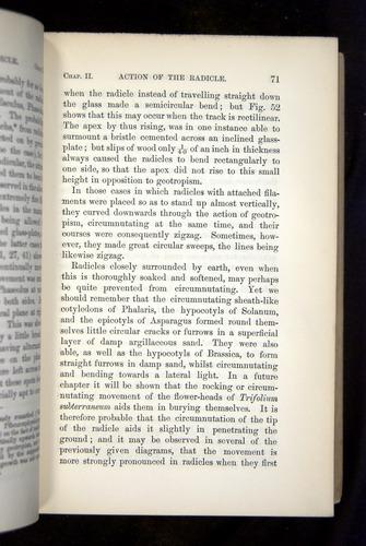 Image of Darwin-F1325-1880-071