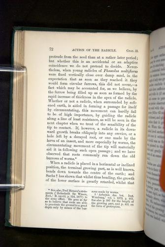 Image of Darwin-F1325-1880-072