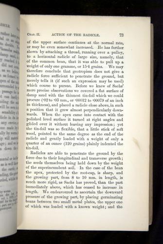 Image of Darwin-F1325-1880-073