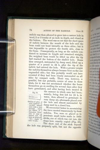 Image of Darwin-F1325-1880-074