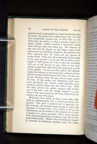 Image of Darwin-F1325-1880-076