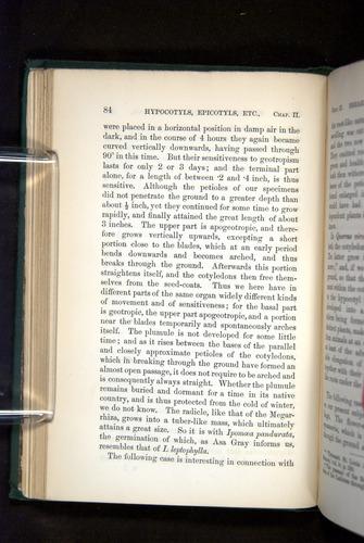 Image of Darwin-F1325-1880-084