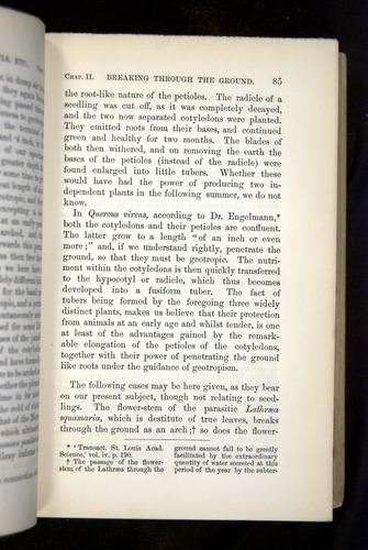 Image of Darwin-F1325-1880-085