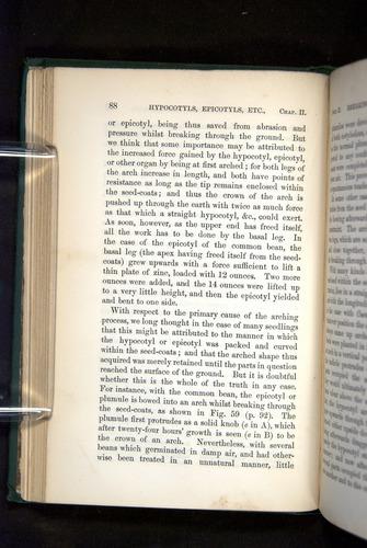 Image of Darwin-F1325-1880-088