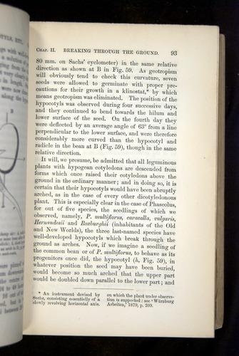 Image of Darwin-F1325-1880-093