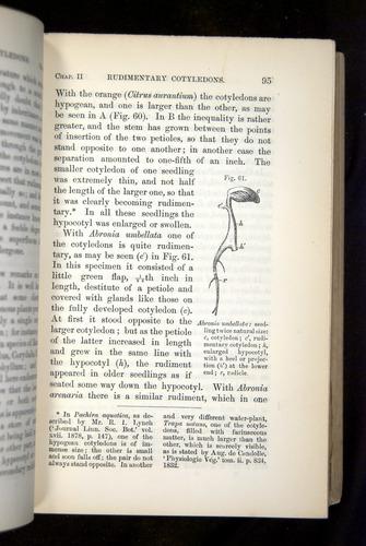 Image of Darwin-F1325-1880-095