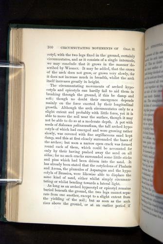Image of Darwin-F1325-1880-100