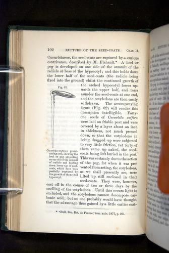 Image of Darwin-F1325-1880-102