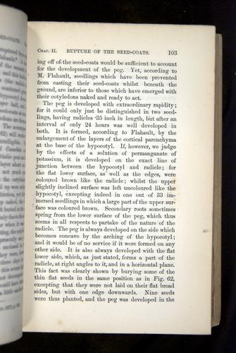 Image of Darwin-F1325-1880-103