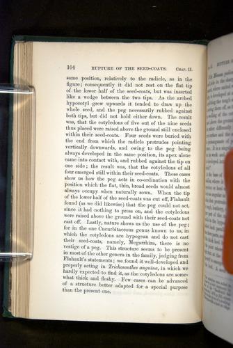 Image of Darwin-F1325-1880-104