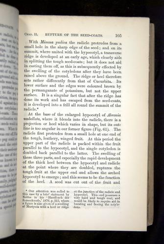 Image of Darwin-F1325-1880-105