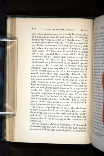 Image of Darwin-F1325-1880-112