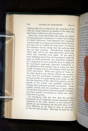 Image of Darwin-F1325-1880-114