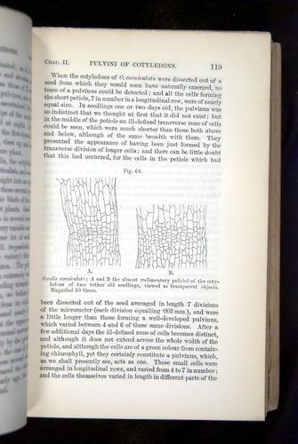Image of Darwin-F1325-1880-119