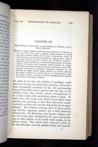 Image of Darwin-F1325-1880-129