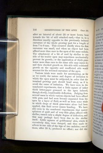 Image of Darwin-F1325-1880-146