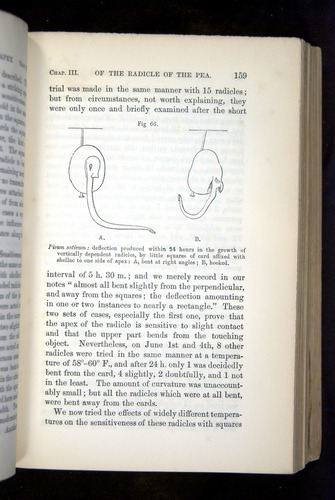 Image of Darwin-F1325-1880-159