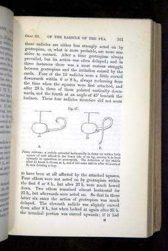 Image of Darwin-F1325-1880-161