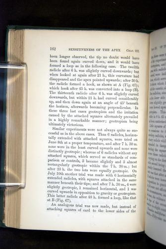 Image of Darwin-F1325-1880-162