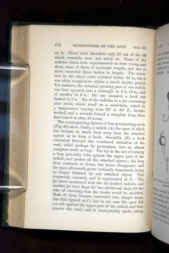 Image of Darwin-F1325-1880-178