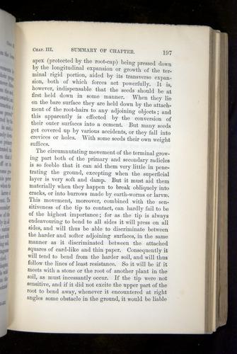 Image of Darwin-F1325-1880-197