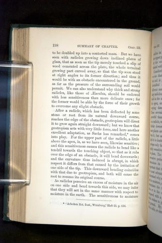 Image of Darwin-F1325-1880-198