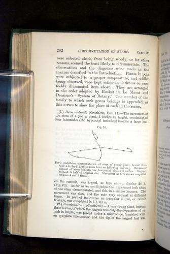 Image of Darwin-F1325-1880-202