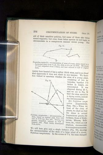 Image of Darwin-F1325-1880-204