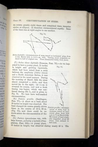 Image of Darwin-F1325-1880-205
