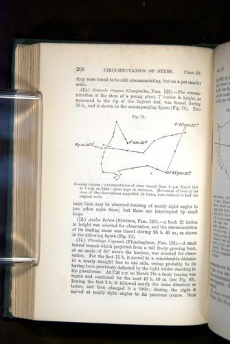 Image of Darwin-F1325-1880-208