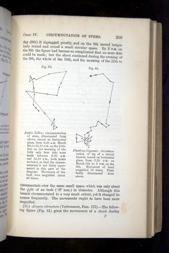Image of Darwin-F1325-1880-209