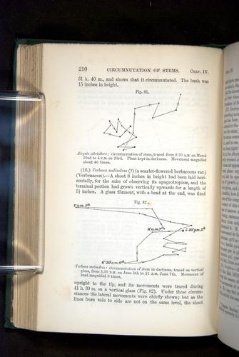 Image of Darwin-F1325-1880-210