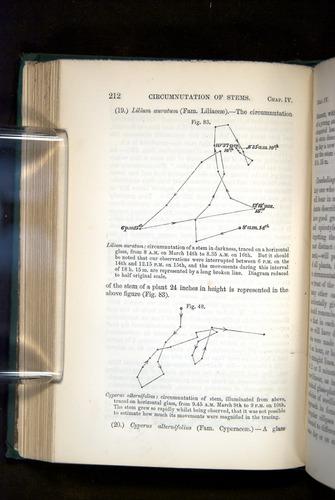 Image of Darwin-F1325-1880-212
