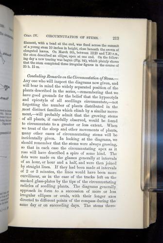 Image of Darwin-F1325-1880-213