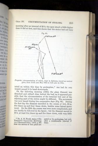Image of Darwin-F1325-1880-215