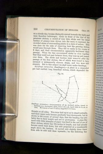 Image of Darwin-F1325-1880-218