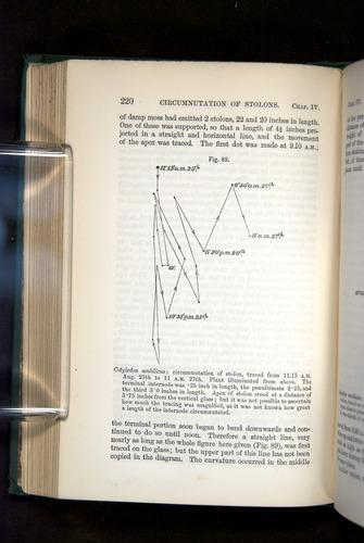 Image of Darwin-F1325-1880-220