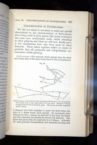 Image of Darwin-F1325-1880-223