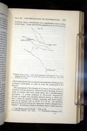 Image of Darwin-F1325-1880-225