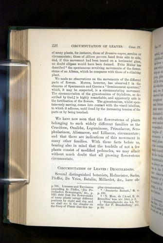 Image of Darwin-F1325-1880-226