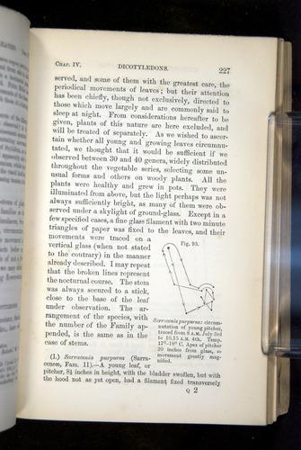 Image of Darwin-F1325-1880-227